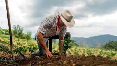 Pandemia benefició a productores del campo
