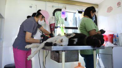 Centro de Control y Bienestar Animal de Toluca