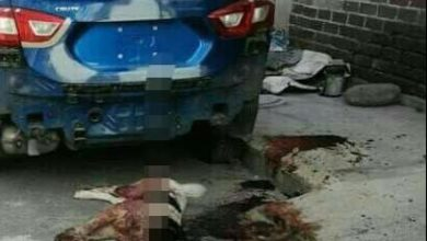 asesinan perros callejeros