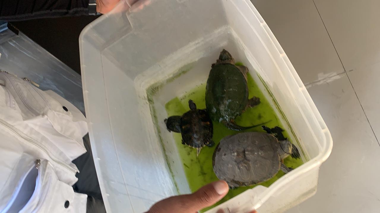 animales rescatados