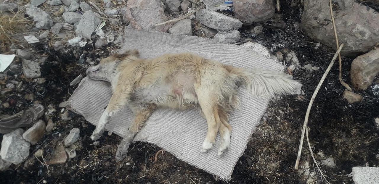 perros envenenados