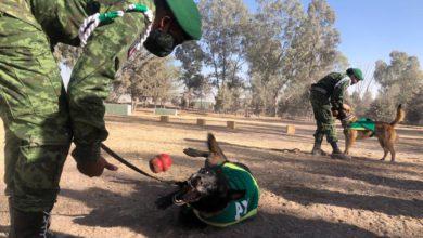 perros soldados