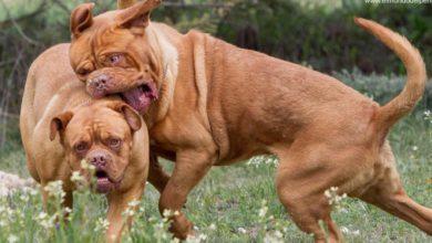Pelea de perros / Foto https://www.elmundodelperro.net/