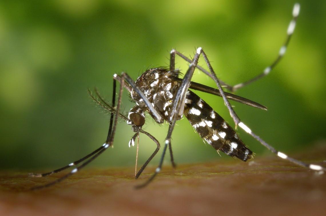 Dengue zika chikungunya La Jornada Estado de México