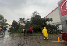 los municipios más afectados fueron Metepec, San Mateo Atenco, Lerma, Ocoyoacac, Mexicaltzingo, Almoloya de Juárez y Toluca