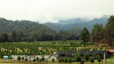 Bosque Esmeralda, donde se encuentra el primer santuario de luciérnagas