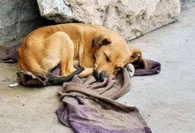 Perro dormido en la calle
