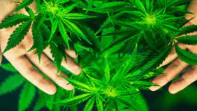 Uso lúdico de la mariguana