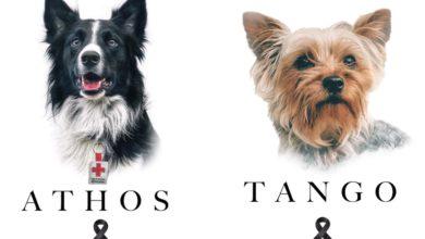 Tango y Athos, perros rescatistas