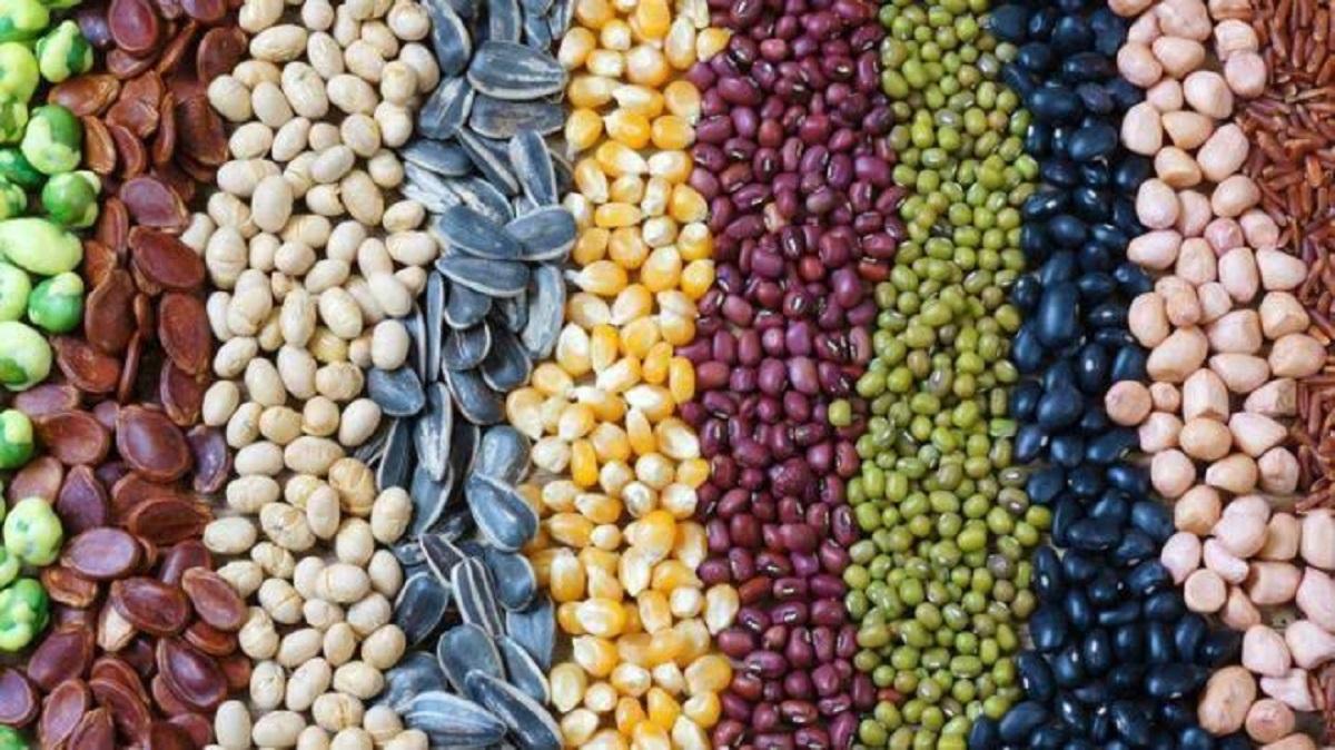 Las semillas que han incrementado su precio