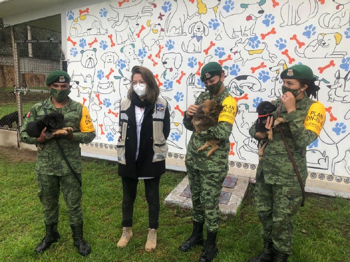 Militares rescataron a los animalitos