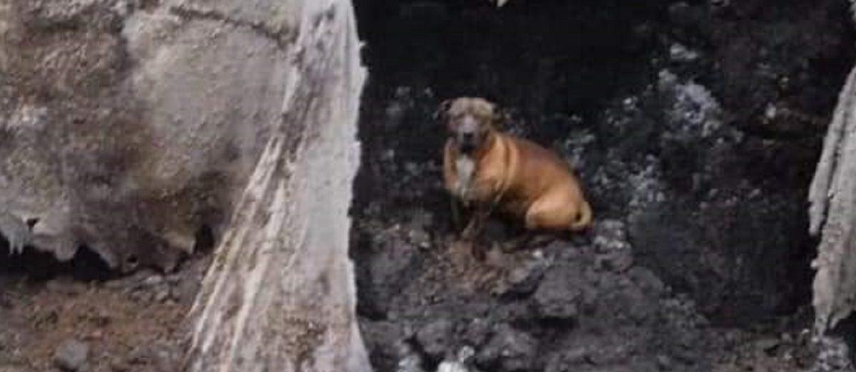 El perro dentro del socavón