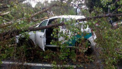 Automóvil atrapado por árbol