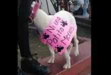 Piden castigos severos para el maltrato animal